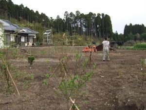 実家の庭(畑?)