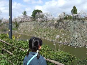 石垣がかっこいい某城の桜