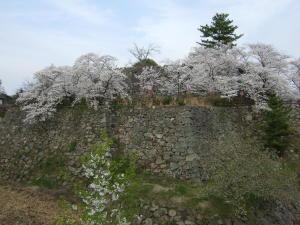 今日のお城の桜