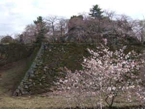 お城の桜090402