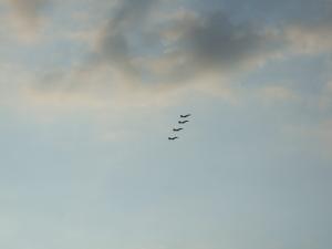 4機編隊飛行